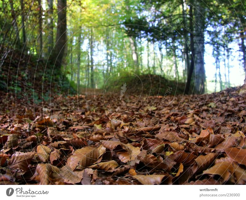 forest scene Trip Hiking Nature Landscape Plant Earth Autumn Forest Beech wood Blue Brown Yellow Green Relaxation Environment Woodground Leaf Deciduous forest