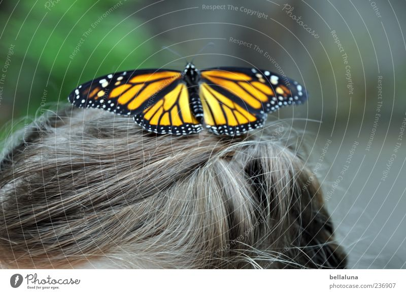 spot landing Human being Child Girl Infancy Life Hair and hairstyles 1 Animal Wild animal Butterfly Wing Elegant Fantastic Beautiful Brown Green Black White