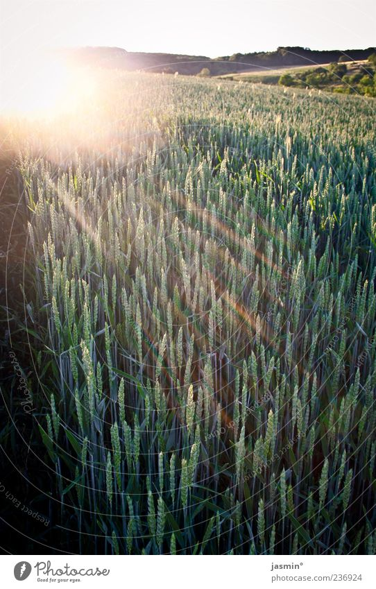 Nature Green Sun Far-off places Landscape Warmth Weather Gold Field Agriculture Sunset