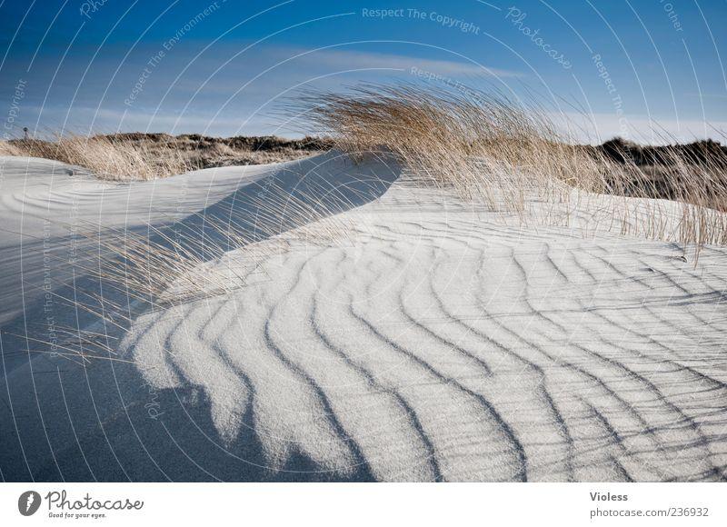 Spiekeroog ...wind creation Nature Landscape Sand Beach North Sea Breathe Movement Fresh Blue Life Vacation & Travel Dune Marram grass Undulation Wavy line