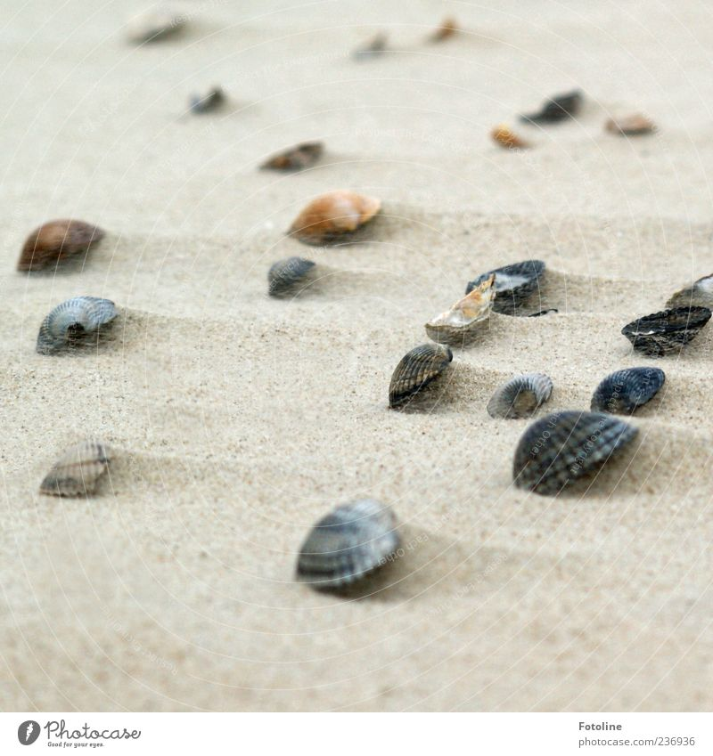 Nature Beach Environment Sand Bright Earth Natural Elements Many North Sea Mussel Multiple Flotsam and jetsam
