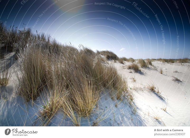 Blue Plant Sun Ocean Summer Beach Far-off places Grass Weather Wind Glittering Natural Island Beautiful weather North Sea Dune
