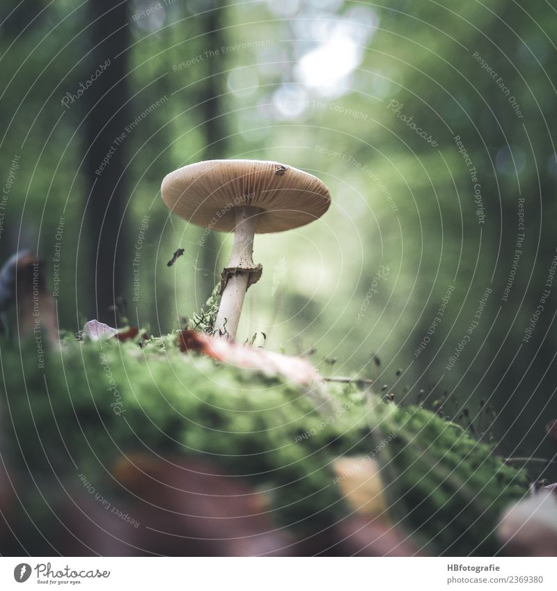 fairytale forest Environment Nature Animal Summer Autumn Plant Mushroom Forest Joy Calm Moss Collection Colour photo Exterior shot Deserted Day Blur