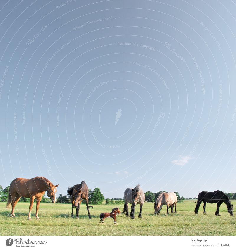 Sky Nature Animal Meadow Small Horizon Large Group of animals Horse Curiosity Beautiful weather Toys Pasture False Cloudless sky Foreign