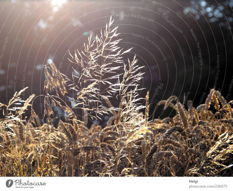 Nature Beautiful Plant Summer Black Environment Grass Moody Brown Gold Field Glittering Natural Esthetic Growth Illuminate