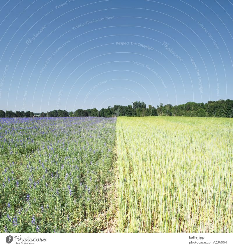 field lines Work and employment Economy Agriculture Forestry Environment Nature Landscape Plant Earth Sky Cloudless sky Tree Flower Foliage plant