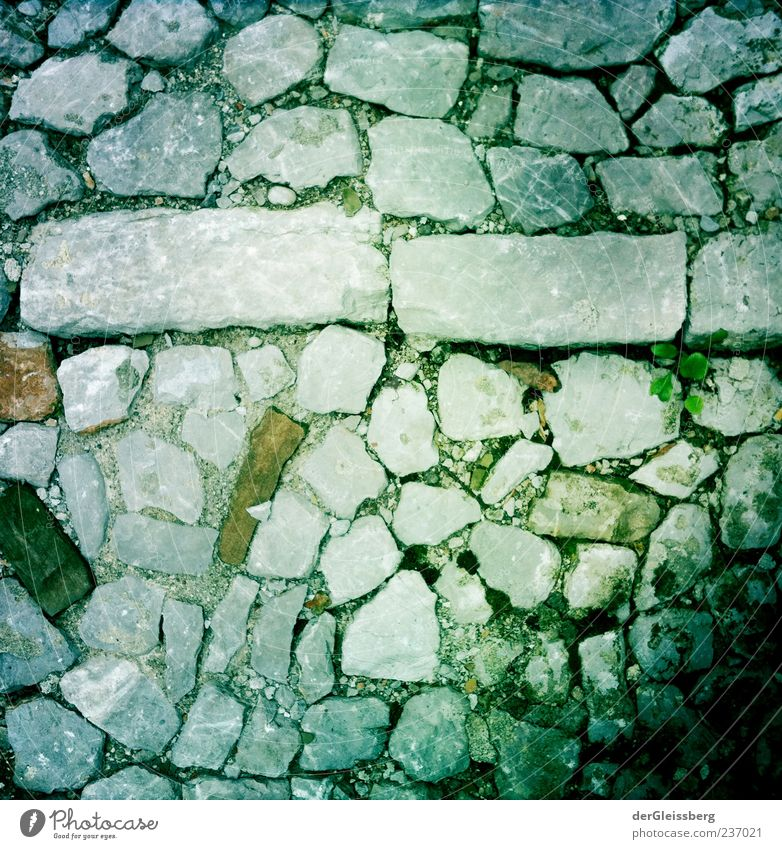 Stony paths 2 Street Lanes & trails Gray Green Plant Paving stone Cobblestones Stone Rectangle Colour photo Bird's-eye view Deserted