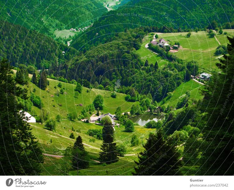 look down Nature Sunlight Summer Beautiful weather Tree Meadow Forest Green Black White Freiburg im Breisgau Schauinsland Coniferous trees Pond Mountain Valley