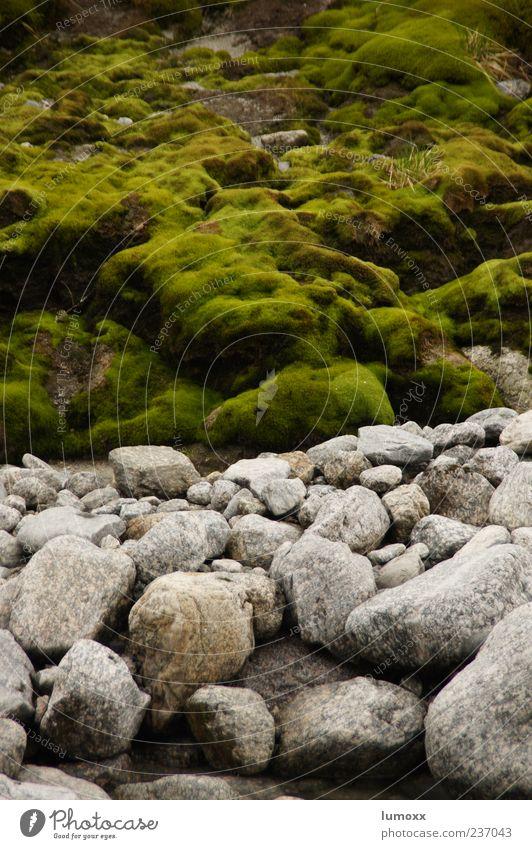 Nature Green Environment Gray Stone Europe River bank Moss Norway Scandinavia Overgrown