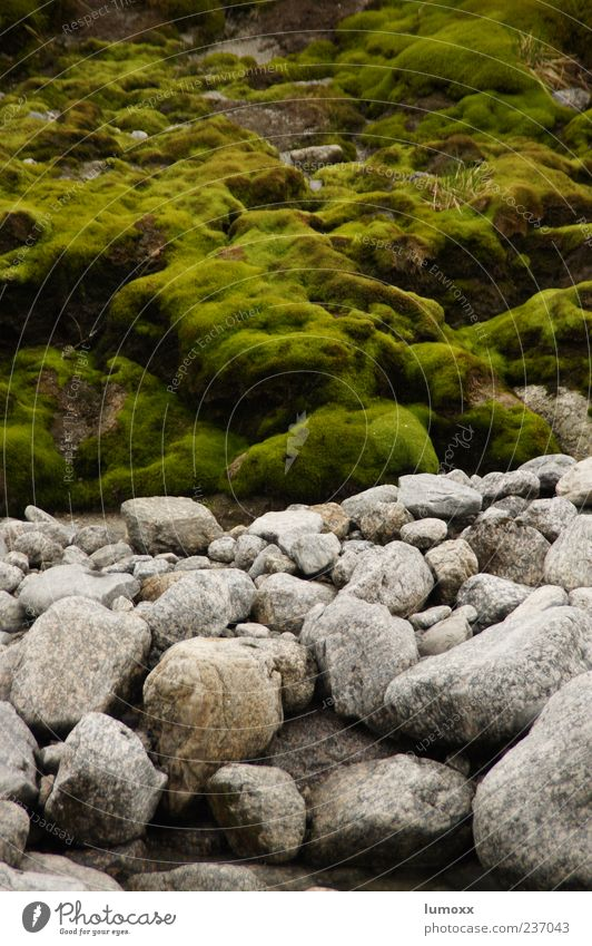 Nature Green Environment Gray Stone Europe River bank Moss Norway Scandinavia Overgrown