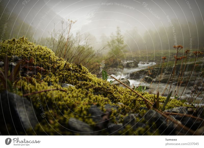 Nature Water Green Environment Landscape Mountain Moody Fog Natural Wet Travel photography Europe River bank Moss Norway Scandinavia