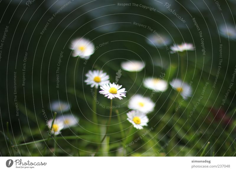 Nature White Green Plant Summer Flower Relaxation Meadow Life Emotions Spring Grass Garden Blossom Bright Moody