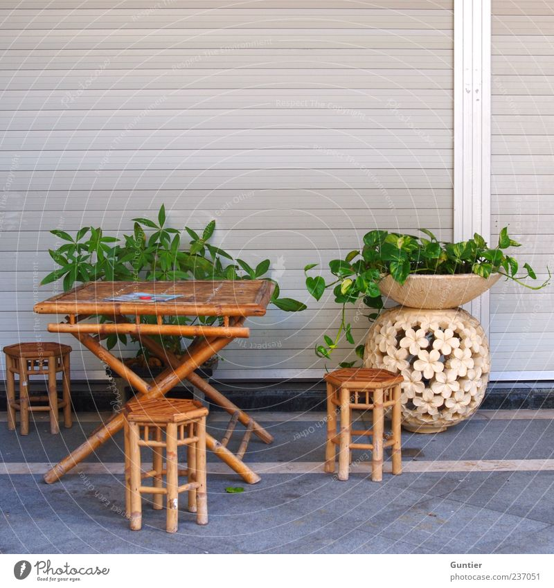 White Green Plant Summer Leaf Gray Brown Table Lifestyle Chair Sidewalk Café Furniture Exotic Flowerpot Vase