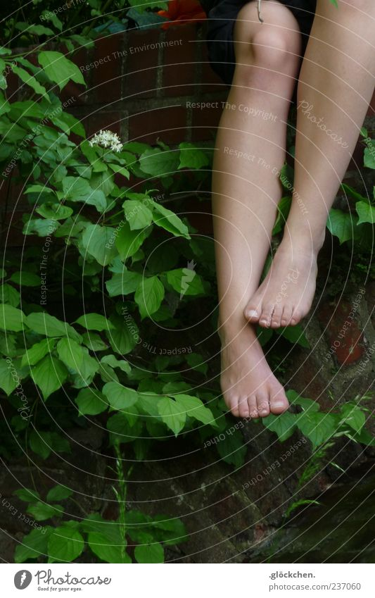 Nature Leaf Spring Natural Growth Bushes Touch Brick Blossoming Safety (feeling of) Modest Woman's leg Lower leg