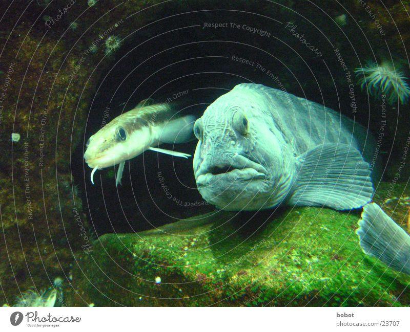 Water Ocean Lake Fish Aquarium Surprise Cave