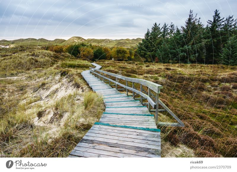 Landscape in the dunes on the island of Amrum Relaxation Vacation & Travel Tourism Island Nature Clouds Autumn Tree Coast North Sea Lanes & trails Blue