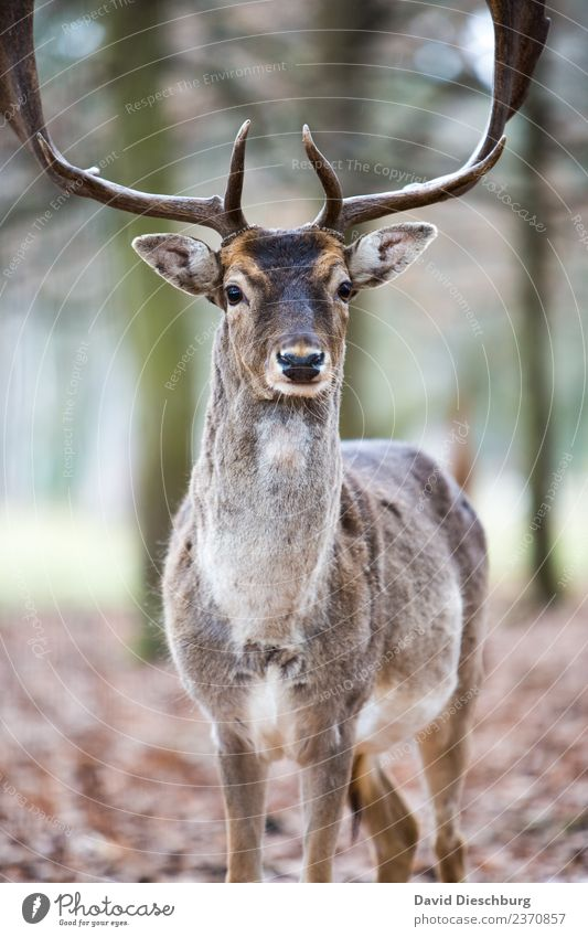 stag Nature Spring Summer Autumn Beautiful weather Tree Forest Wild animal Animal face Pelt Zoo Petting zoo 1 Idyll Deer Red deer Even-toed ungulate Antlers