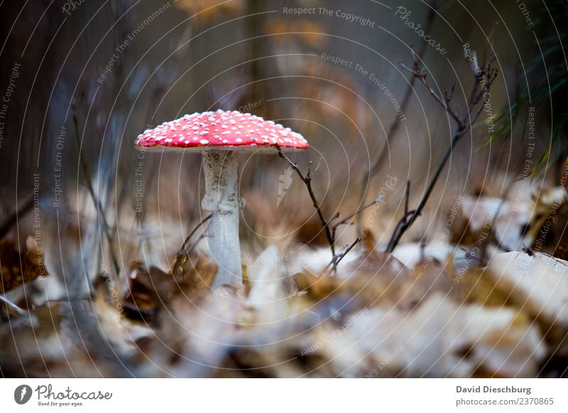 fly agaric Vacation & Travel Trip Agriculture Forestry Nature Plant Animal Spring Autumn Beautiful weather Meadow Brown Yellow Red Black White Woodground Leaf