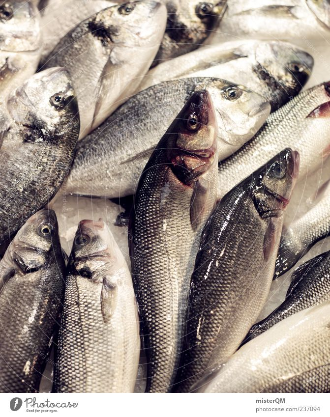 Delicious fish. Food Fish Seafood Esthetic Fishery Fish market Many Disgust Wet Raw Scales Fresh Fishing quota Wholesale market Dorade Colour photo