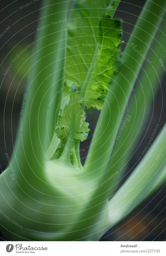 Kohlrabi green Food Vegetable Organic produce Vegetarian diet Green Colour photo Exterior shot Close-up Detail Shallow depth of field 1 Deserted Vegan diet