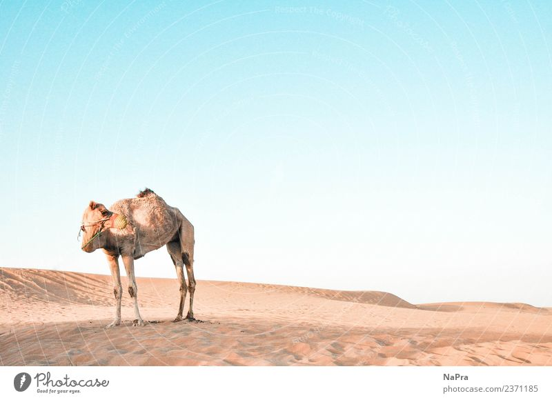 Sent to the desert Relaxation Calm Vacation & Travel Tourism Adventure Far-off places Safari Summer Summer vacation Environment Nature Landscape Sand Air Sky