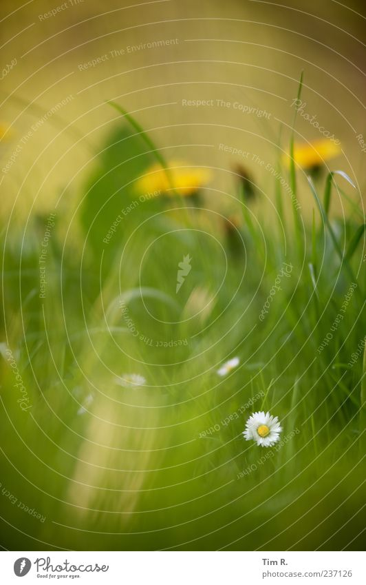 A tooth in the wheel of time Nature Plant Spring Beautiful weather Grass Blossom Wild plant Garden Meadow Fragrance Discover Fresh Positive Multicoloured Yellow