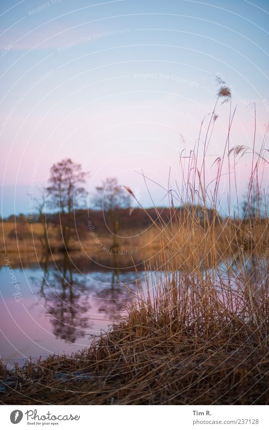 Sky Nature Blue Water Calm Landscape Pink Esthetic Uniqueness River Common Reed River bank Water reflection