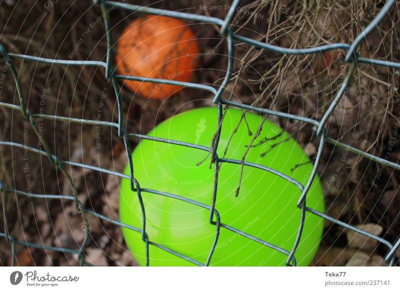 Green Colour Orange Exceptional Lie Authentic Gloomy Balloon Uniqueness Toys Sphere Perspective Wire netting fence