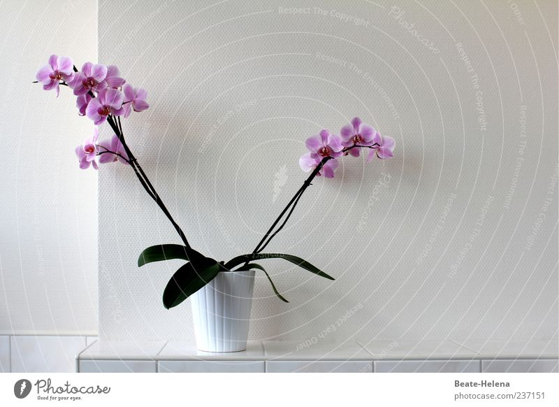 White Green Plant Leaf Colour Blossom Exceptional Esthetic Violet Blossoming Fragrance Exotic Orchid Pot plant Perspective Flower
