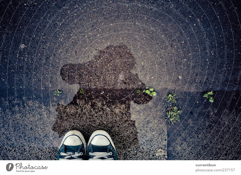 Woman Green Footwear Stand Asphalt Puddle Chucks Partially visible Human being Water reflection