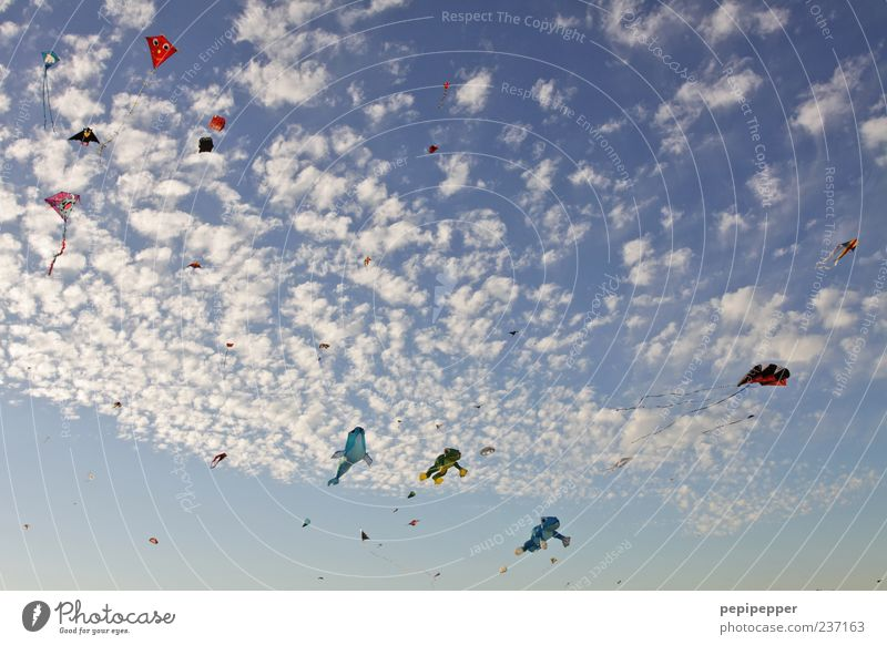 Sky Summer Clouds Above Movement Wind Leisure and hobbies Flying Exceptional Esthetic Many Beautiful weather Worm's-eye view Perspective Hang gliding