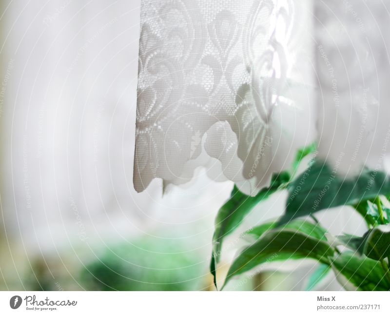 at grandma's Plant Pot plant Window Cloth White Drape Lace Curtain Colour photo Interior shot Close-up Deserted Copy Space left Morning Light