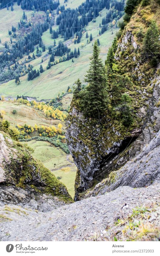 This is a deep insight Mountain Landscape Rock Alps Forest of Bregenz Wall of rock Austria Canyon To fall Looking Threat Tall Above Gray Green Fear