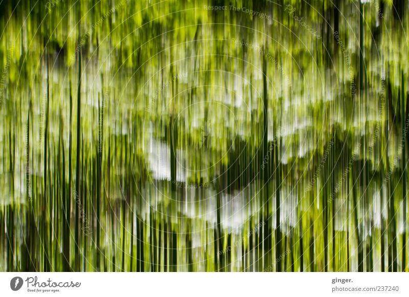 grasses Nature Plant Grass Green Stripe Sustained To fall Black White Line Exceptional Colour photo Exterior shot Experimental Abstract Pattern