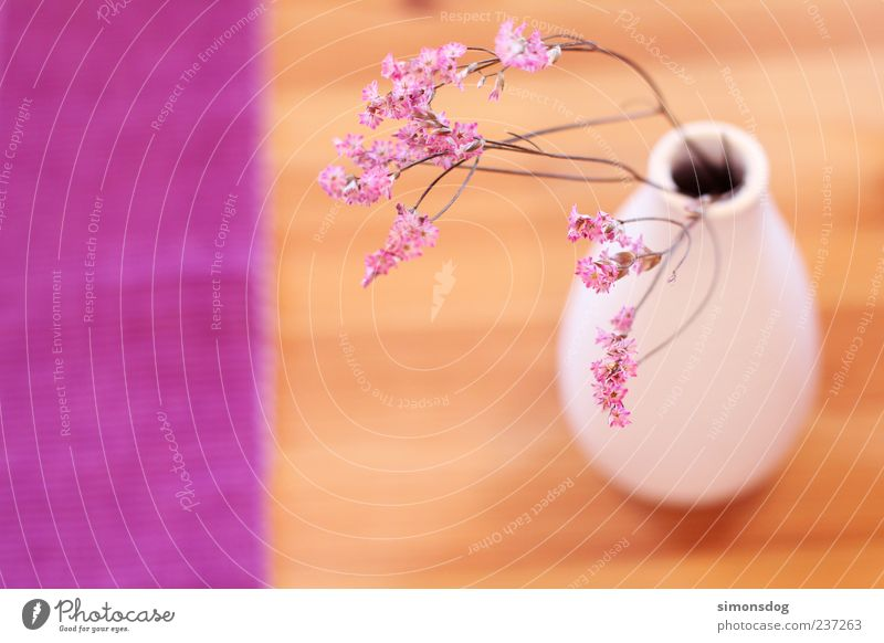 White Beautiful Flower Emotions Wood Blossom Moody Pink Natural Exceptional Table Decoration Round Violet Harmonious Vase