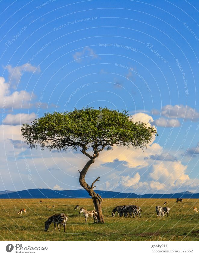 Sky Nature Vacation & Travel Landscape Tree Clouds Far-off places Environment Tourism Freedom Trip Horizon Wild animal Adventure Group of animals Observe