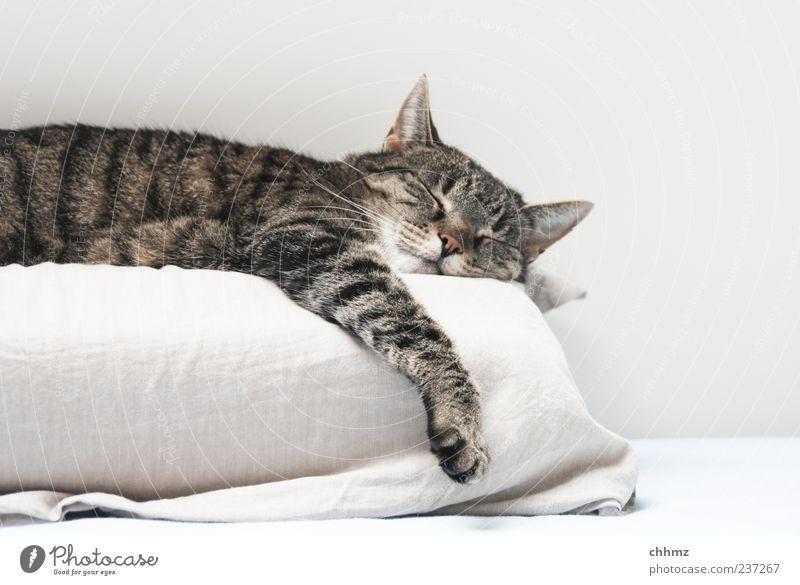 Cat White Animal Calm Black Relaxation Gray Bright Contentment Lie Esthetic Sleep Pelt Serene To enjoy Paw