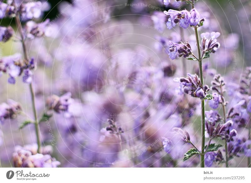 Nature Plant Flower Relaxation Calm Blossom Healthy Feasts & Celebrations Birthday Sleep Wedding Wellness Violet Harmonious Fragrance Meditation