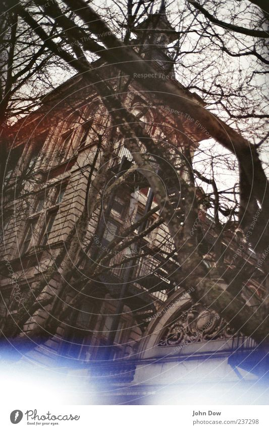 Old Tree Window Architecture Building Facade Growth Bushes Uniqueness Transience Branch Mysterious Manmade structures Historic Past Analog
