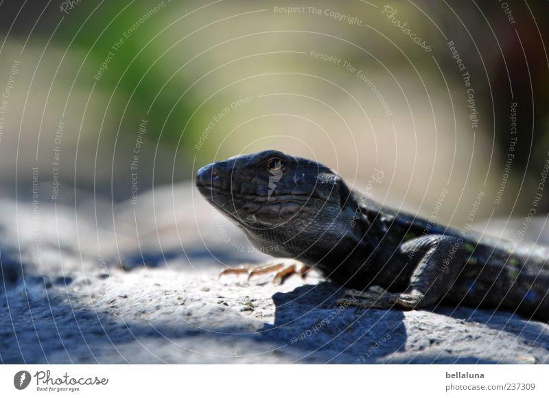 Nature Summer Animal Sand Wild animal Sit Break Beautiful weather Rest Tenerife Lizards