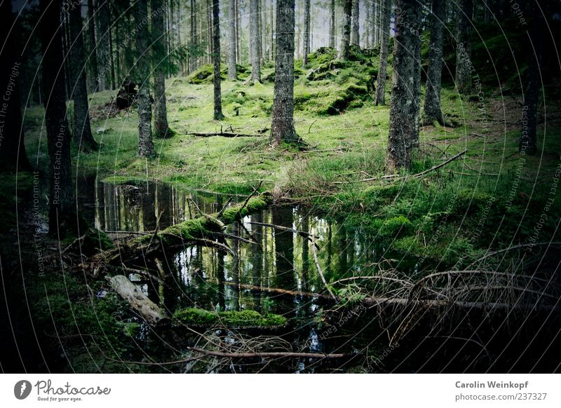 German forest. Environment Nature Landscape Autumn Tree Bushes Moss Meadow Forest Hill Reflection Germany Black Forest Green Colour photo Exterior shot Deserted