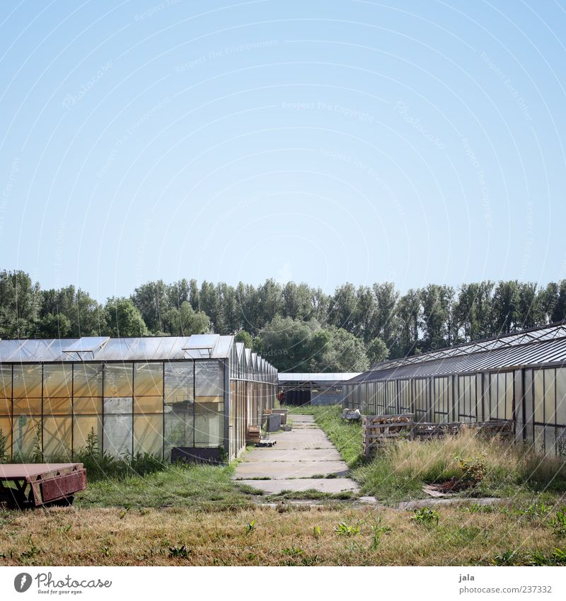 greenhouse Sky Plant Tree Grass Large Greenhouse Market garden Colour photo Exterior shot Deserted Copy Space top Day