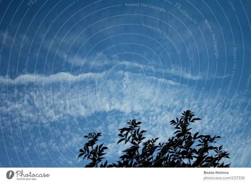 There's something in the air. Nature Sky Clouds Summer Weather Beautiful weather Tree Esthetic Natural Blue White Movement Clouds in the sky Cloud pattern