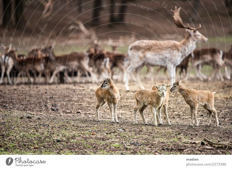 musketeers Landscape Animal Spring Grass Hill Wild animal Group of animals Herd Stand deer Fawn Meeting Colour photo Subdued colour Exterior shot Deserted