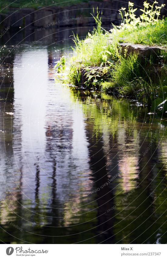 on the avenue Calm Water Grass River bank Brook Nature Colour photo Exterior shot Deserted Copy Space bottom Light Reflection Water reflection Surface of water