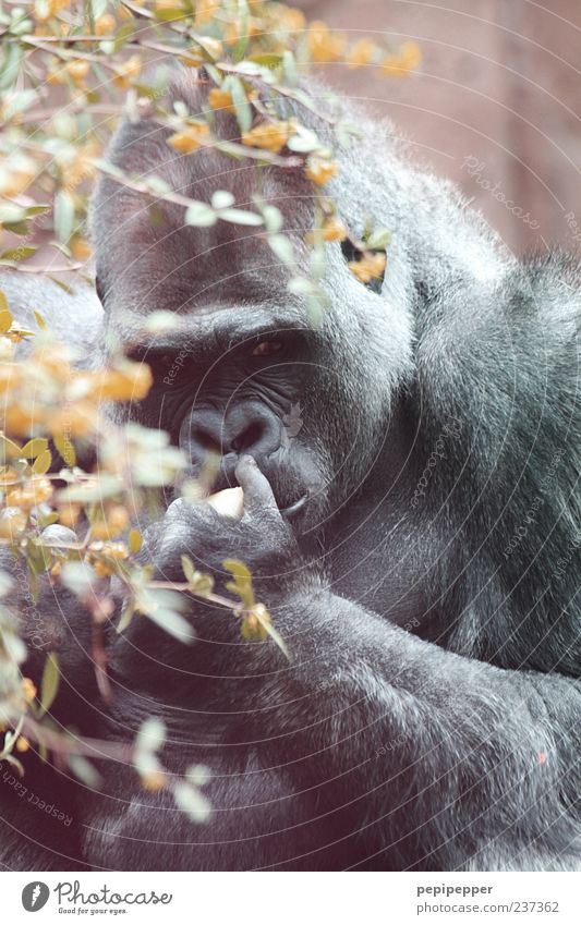 Summer Animal Fruit Wild animal Animal face Zoo To feed Paw Monkeys Gorilla