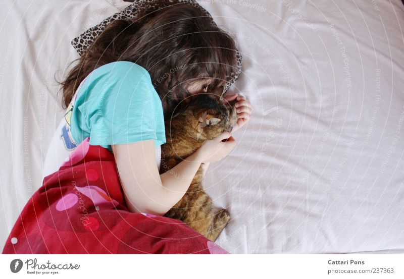 Cat Woman Youth (Young adults) Adults Relaxation Feminine Together Contentment Lie Young woman Sleep Bed Uniqueness Soft Touch To hold on