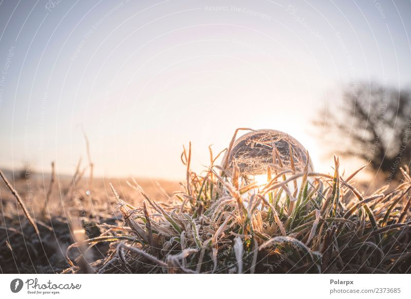 Glass orb lighting up in the sunrise on frozen grass Nature Beautiful Colour Green White Winter Natural Snow Grass Design Bright Decoration Weather Glittering