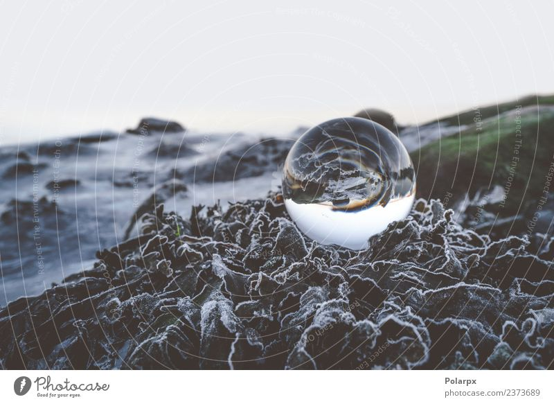 Glass orb on frozen leaves Beautiful Winter Environment Nature Plant Earth Weather Moss Leaf Hill Sphere Globe Glittering Dark Fresh Bright Sustainability Clean