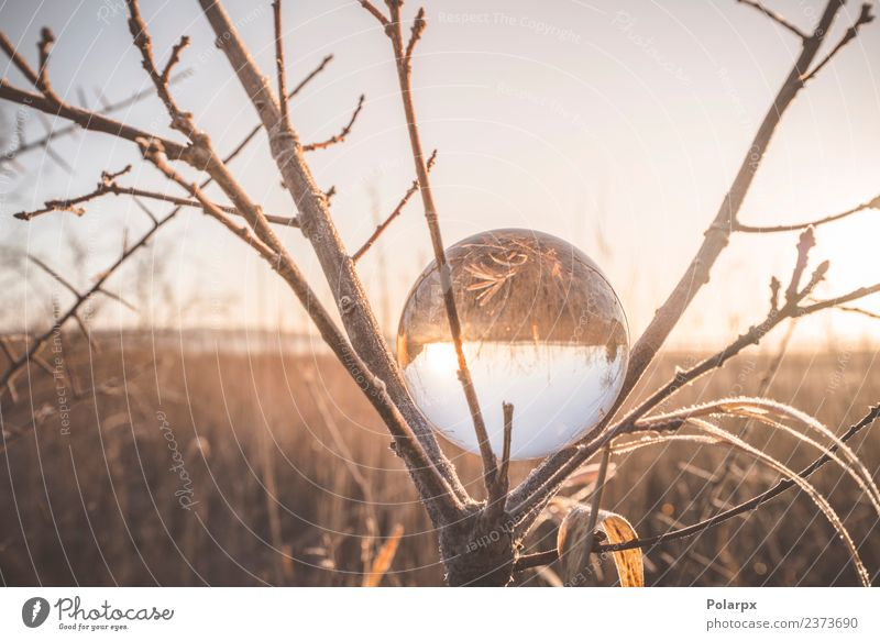 Glass orb in a tree on a cold morning Sky Nature Vacation & Travel Christmas & Advent Beautiful Landscape Sun Tree Winter Forest Environment Autumn Natural Snow